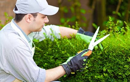 landscaping_services2