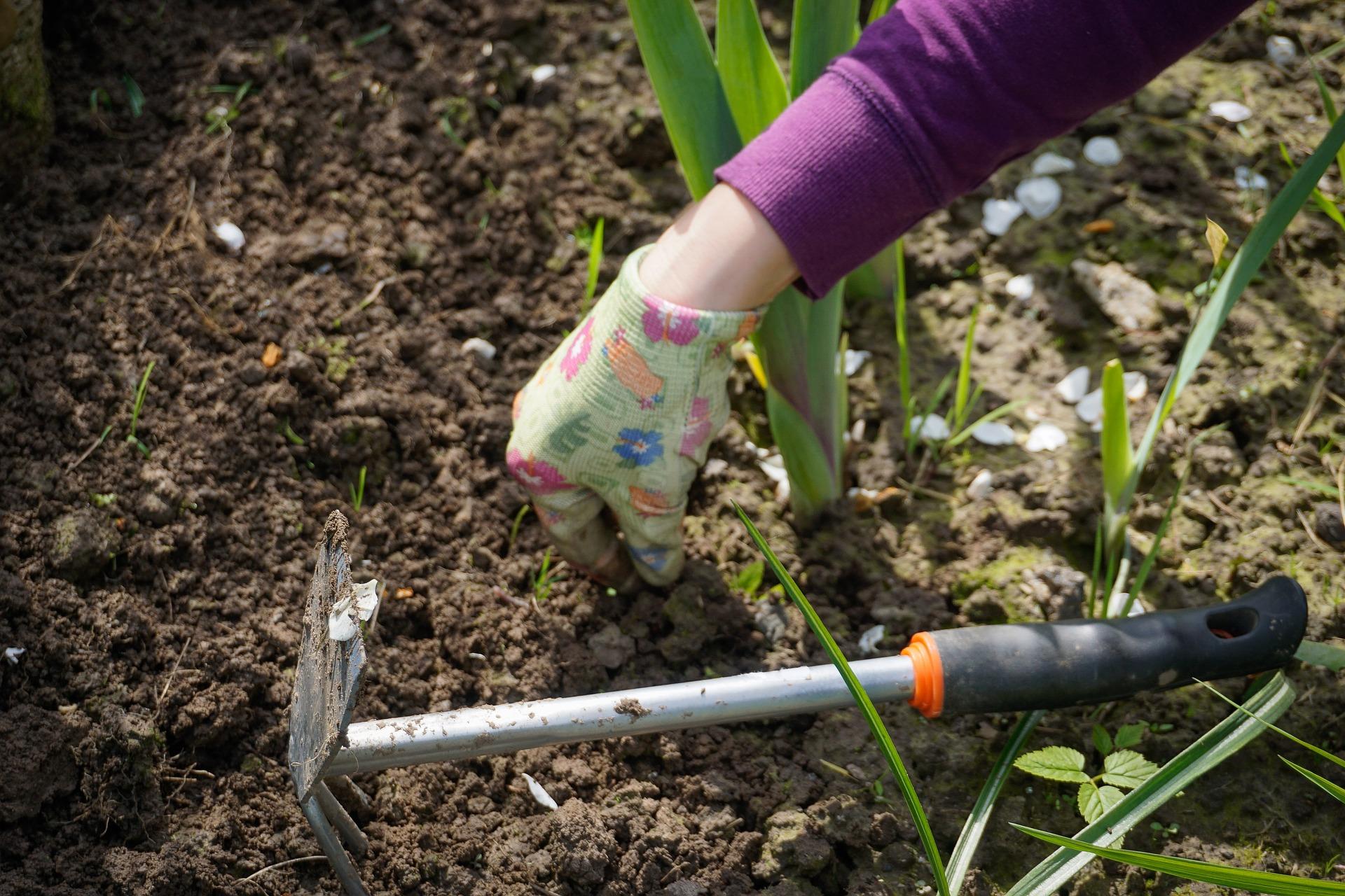 limpiando hierbas en el jardín