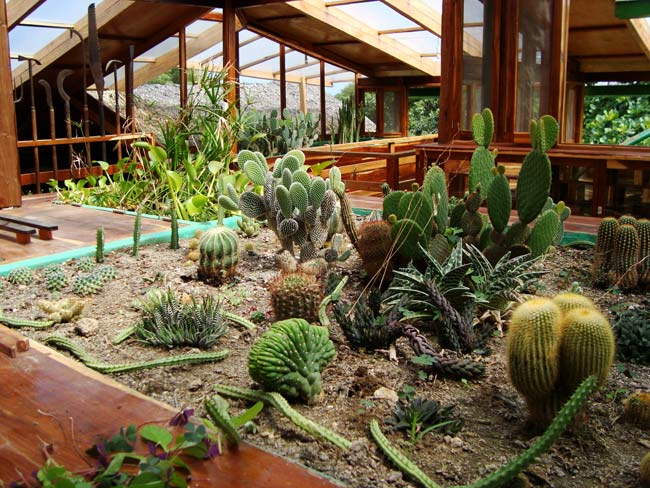 C mo cuidar un cactus cuidado vegetal s l for Jardines con cactus y piedras