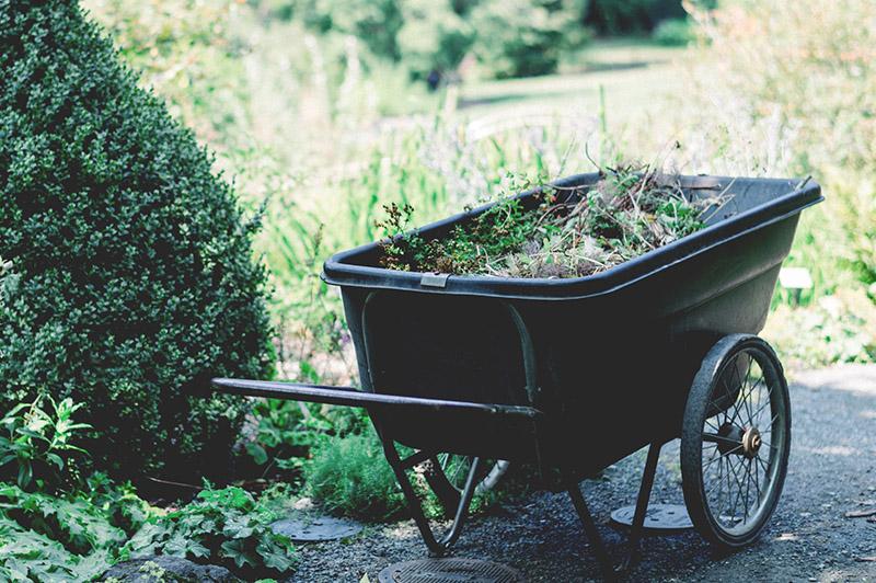 Limpieza jardín Mardid