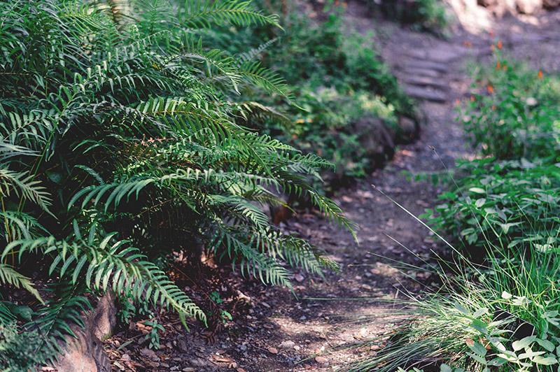 Caminos y suelos de jardín